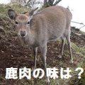 ジビエ(鹿肉)